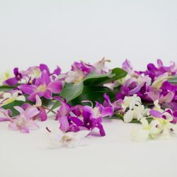 orchid.blossoms.decorating