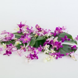 loose orchid blooms Hawaiian dendrobium