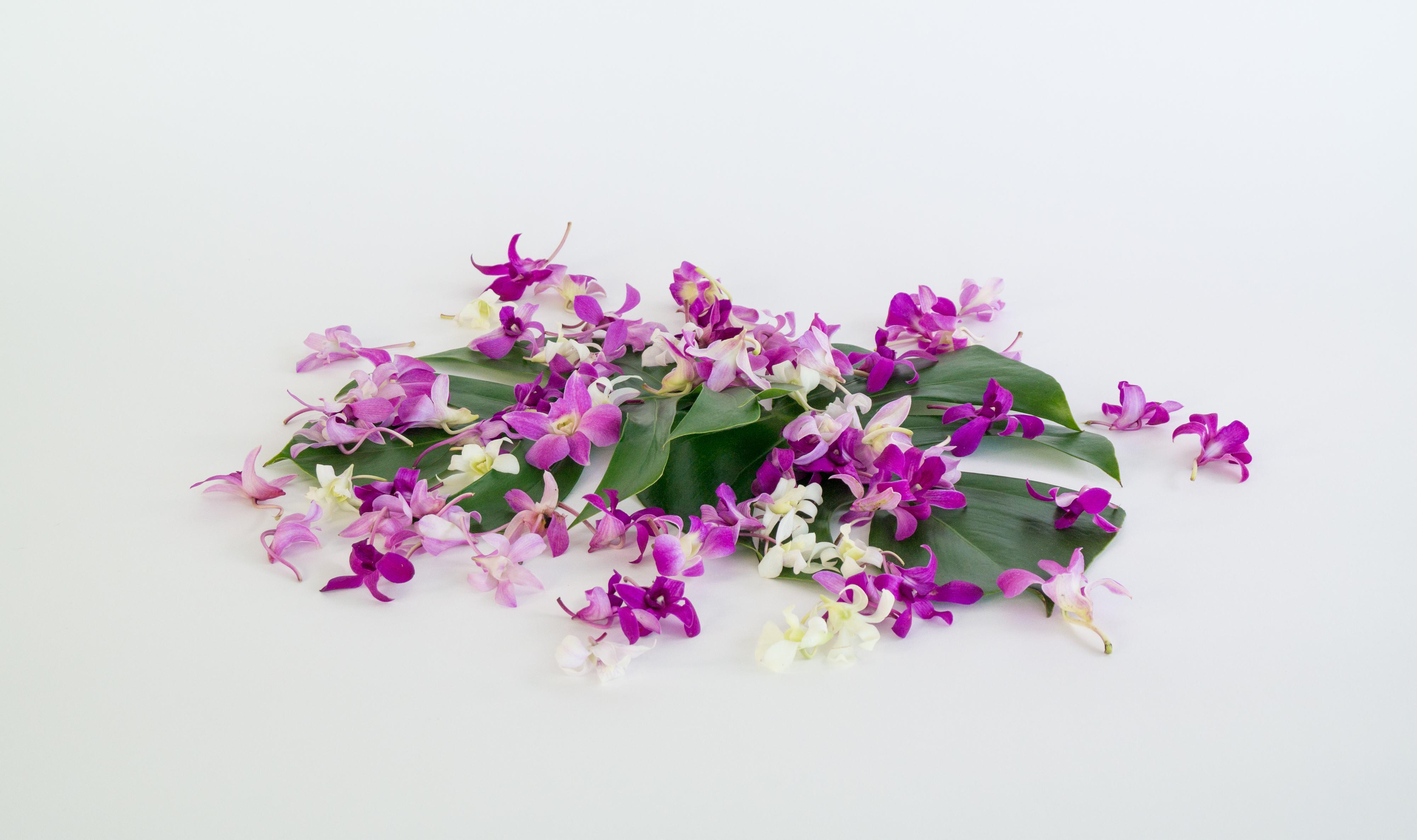Loose orchid blooms fresh hawaiian orchids back to hawaiian weddingsloose orchid blossomsmost popular gifts izmirmasajfo