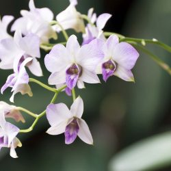 Blooming Orchids of the Month