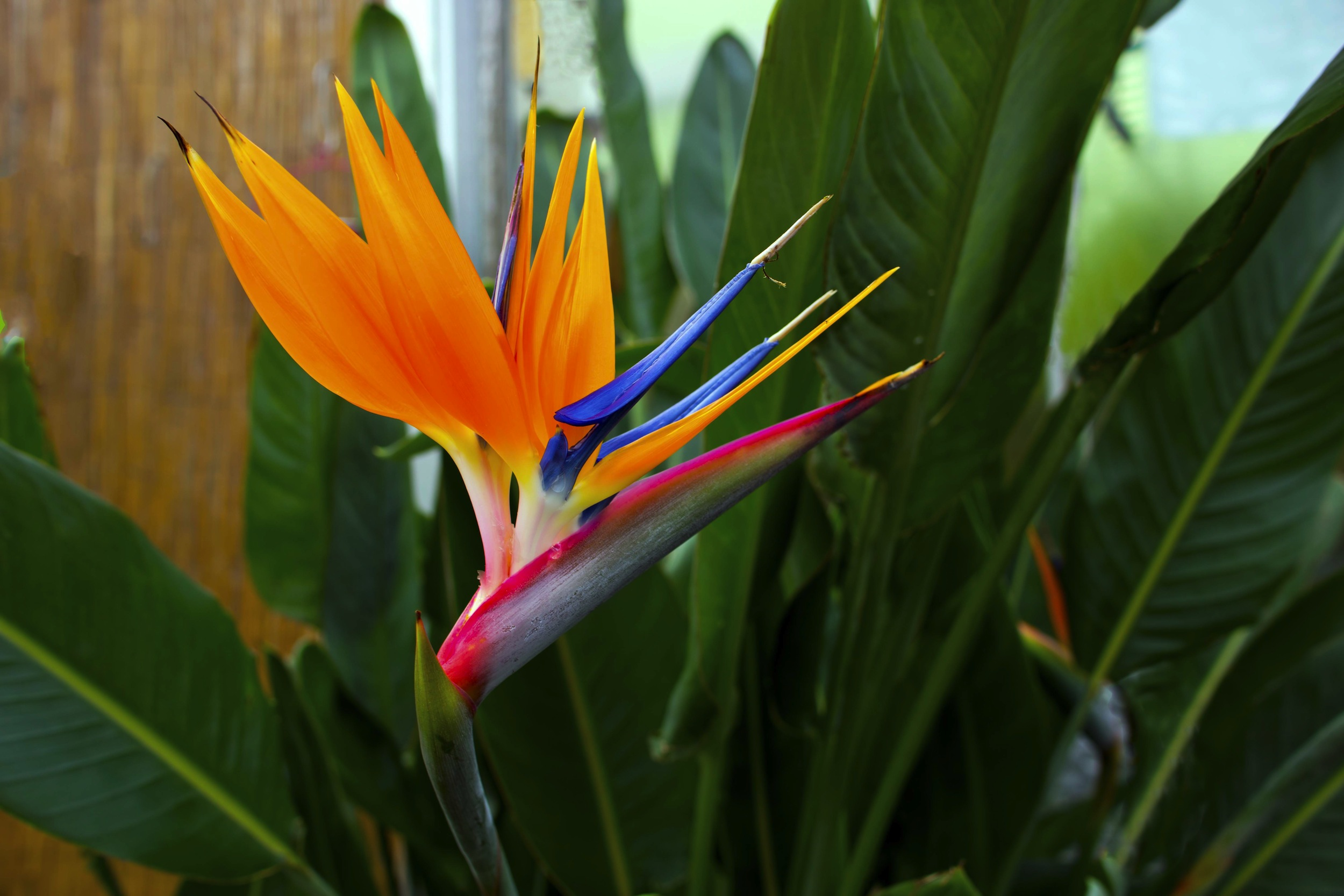 Top 10 Most Beautiful Hawaiian Flowers