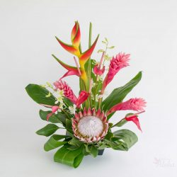 king.protea.ginger