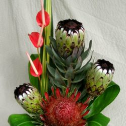 protea flower mix king of kilauea