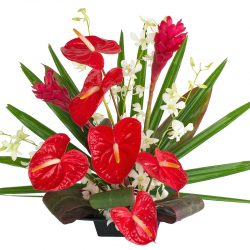 Hawaiian Flowers of the Month - Alii Flowers