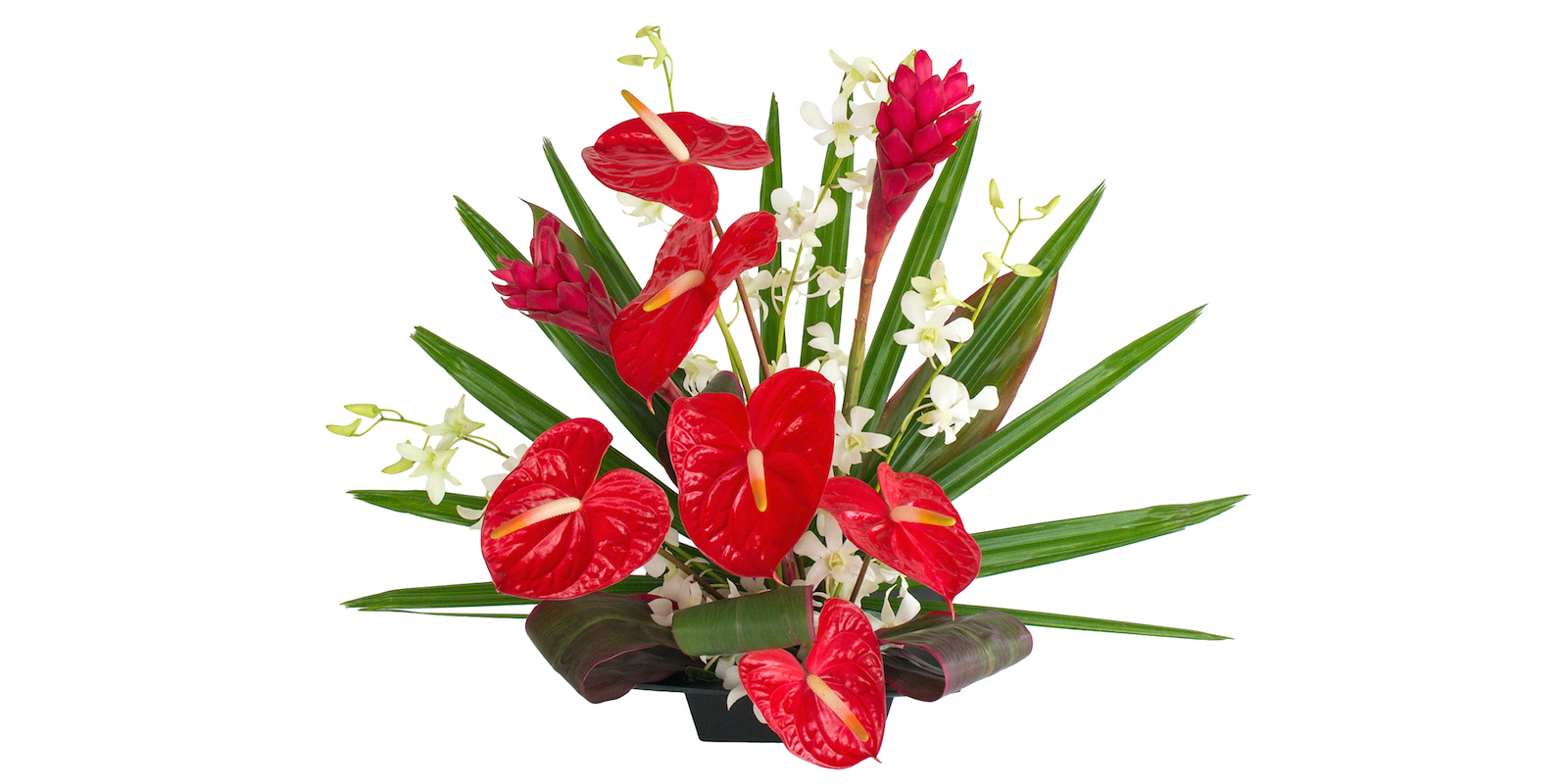 Hawaiian Flowers Of The Month Alii Flowers