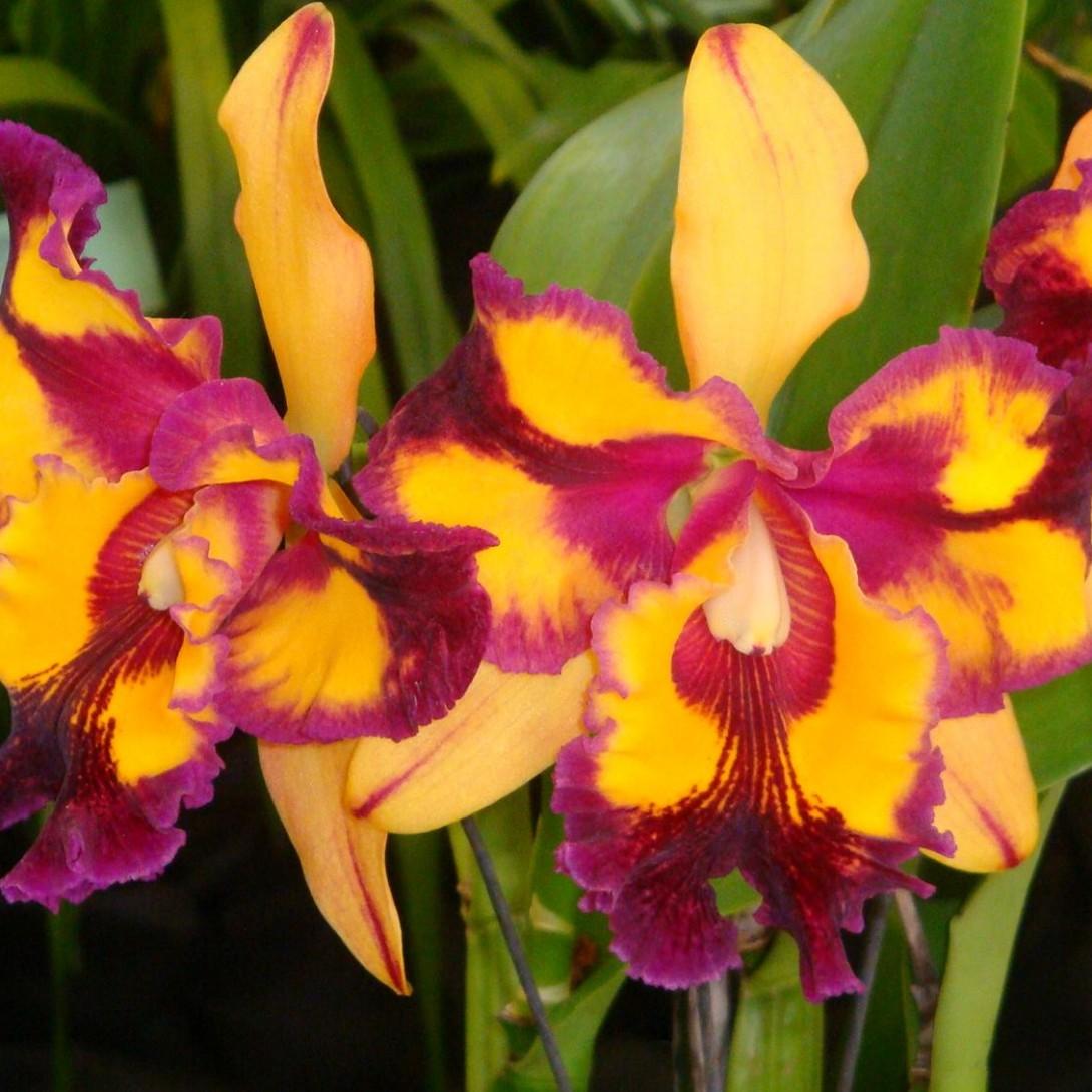 Hawaii blog alii flowers orchids leis izmirmasajfo