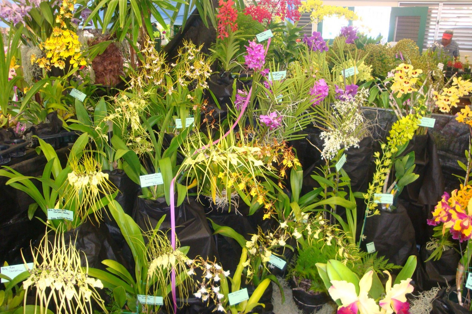 Hawaiian orchids on display