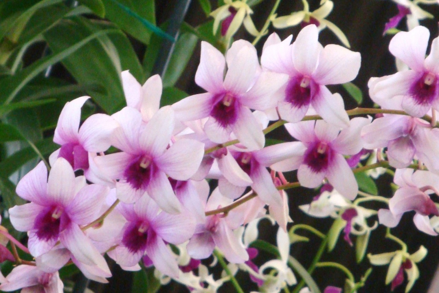 Hawaii Blog - Alii Flowers | Orchids | Leis