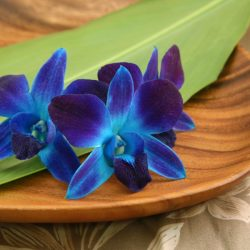 Blue color infused orchids
