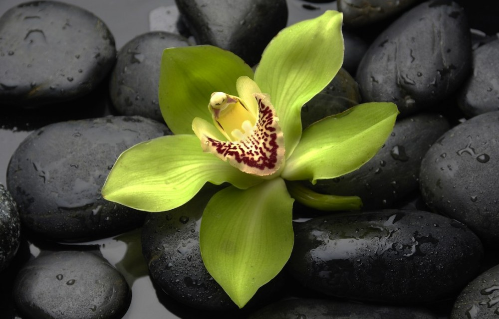 green orchid blossom